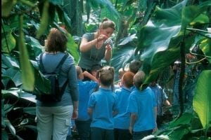 Primary geography school trip to The Living Rainforest